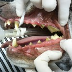 Before dental cleaning
