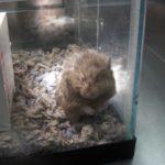 Hamster Feeling Better