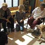Canine Socialization Class with Dr. Reynolds