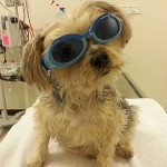 Therapy laser goggles